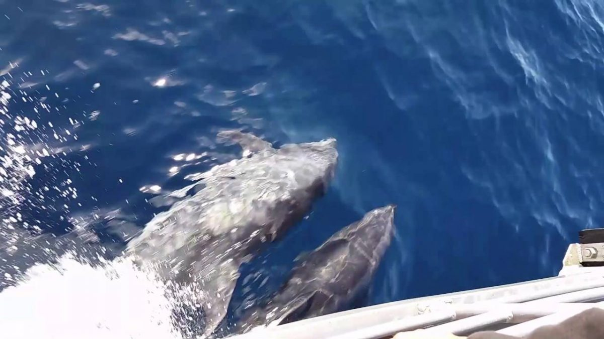 See Wildlife in Miami Driving Boats